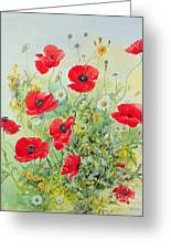 Poppies And Mayweed Greeting Card