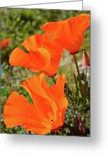 Poppies Antelope Valley Greeting Card