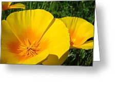 Poppies Art Poppy Flowers 4 Golden Orange California Poppies Greeting Card