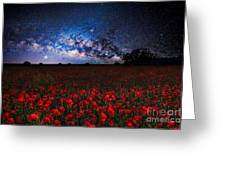 Poppies At Night Greeting Card