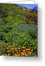 Poppies Before Lupines Greeting Card