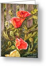 Poppies By The Fence Greeting Card