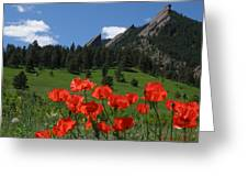 Poppies Flatirons Greeting Card