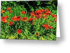 Poppies Flowerbed Greeting Card
