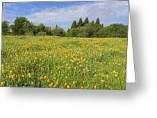 Poppies Forever Greeting Card