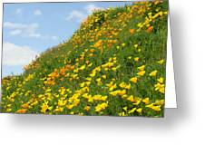 Poppies Hillside Meadow 17 Blue Sky White Clouds Giclee Art Prints Baslee Troutman Greeting Card
