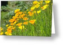 Poppies Hillside Meadow Landscape 19 Poppy Flowers Art Prints Baslee Troutman Greeting Card