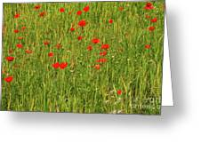 Poppies In A Wheat Field Greeting Card