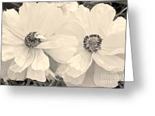 Poppies In Monochrome Greeting Card