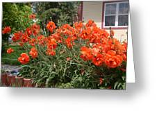Poppies In Springtime Greeting Card