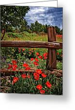 Poppies In The Texas Hill Country Greeting Card