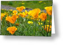 Poppies Meadow Summer Poppy Flowers 18 Wildflowers Poppies Baslee Troutman Greeting Card