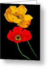 Poppies On Black Greeting Card