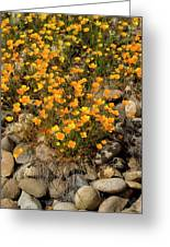 Poppies On The Rocks Greeting Card