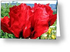 Poppies Plus Greeting Card