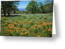 Poppies With A View At Oak Glen Greeting Card