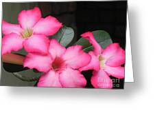 Poppin Pink Flowers Greeting Card