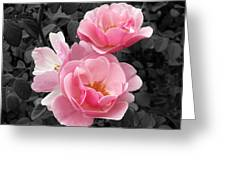 Popping Pink Roses Greeting Card