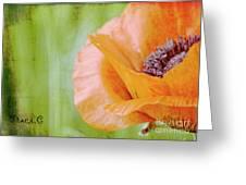Poppy 9 Greeting Card