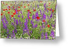 Poppy And Wild Flowers Meadow Nature Scene Greeting Card