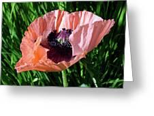 Poppy Beautiful Greeting Card