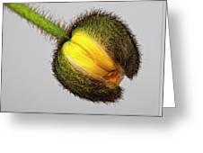 Poppy Bud Greeting Card