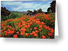 Poppy Explosion Greeting Card