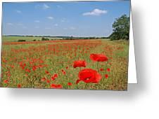 Poppy Fields 1 Greeting Card