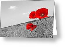 Poppy Fields 2 Black And White Greeting Card
