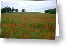 Poppy Fields In Suffolk Greeting Card