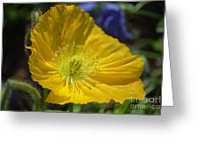 Poppy Flair Greeting Card