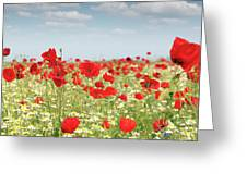 Poppy Flowers Field Nature Spring Scene Greeting Card