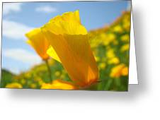 Poppy Flowers Meadow 3 Sunny Day Art Blue Sky Landscape Greeting Card
