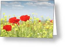 Poppy Flowers Nature Spring Scene Greeting Card