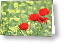 Poppy Flowers Spring Scene Greeting Card