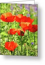 Poppy Garden I Greeting Card
