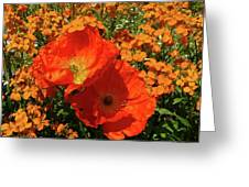 Poppy Glories Greeting Card
