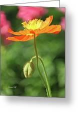 Poppy Glow Greeting Card