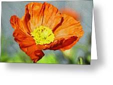 Poppy - Id 16235-142758-2720 Greeting Card