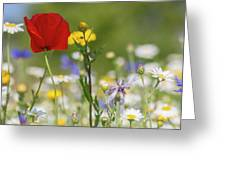 Poppy In Meadow  Greeting Card