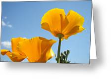 Poppy Landscape Poppies Flowers Blue Sky 12 Baslee Troutman Greeting Card