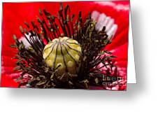 10092 Poppy Love #01 Greeting Card