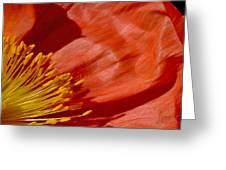 Poppy Love Greeting Card