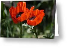 Poppy Pair Greeting Card