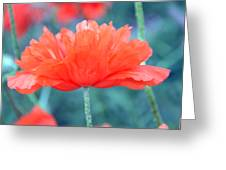 Poppy Profile Greeting Card