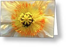 Poppy Greeting Card