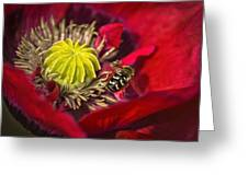 Poppy Visited Part II Greeting Card