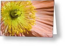Poppy Whorls 1 Greeting Card
