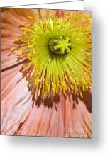 Poppy Whorls 2 Greeting Card