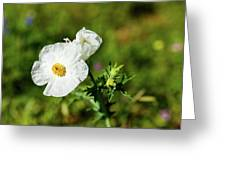 Poppy Wildflower Greeting Card